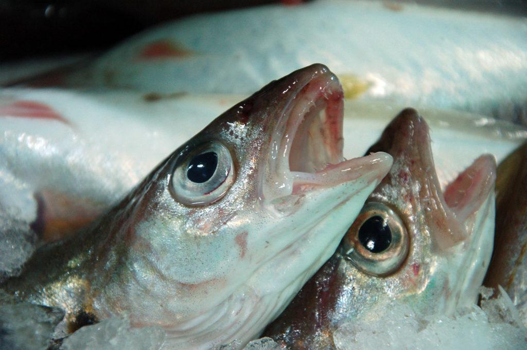 Mareyage - Qualité : Le mareyeur est un maillon incontournable de la filière des produits de la mer